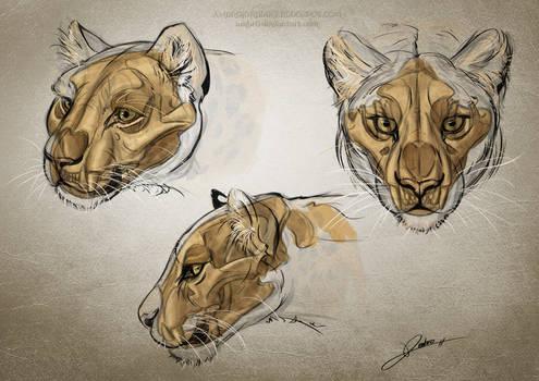 Leopard Anatomy Studies