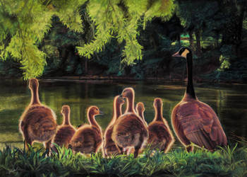 Geese Drawing by AmBr0