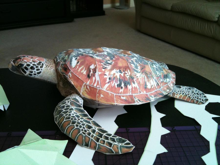 Turtle by volleyballplayer13