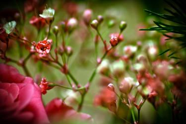 Flower Garden by roxiannie