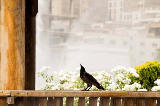 what's up, bird?