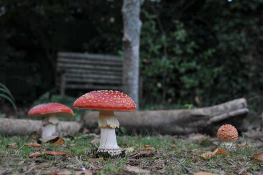 Red Mushrooms 4