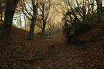 Creepy Autumn Path