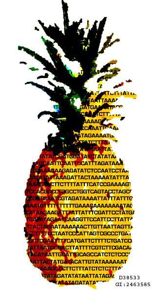 DNA Art: Pineapple