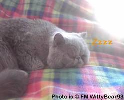 Nice Sleep by WittyBear93