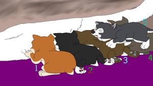 Star-Kilmak's new born puppies Adoptables  TAKEN by WittyBear93