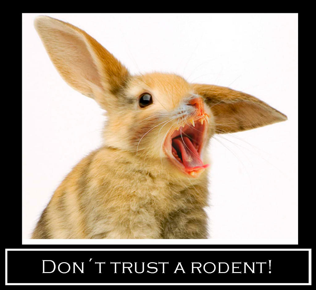 Rodents - meme