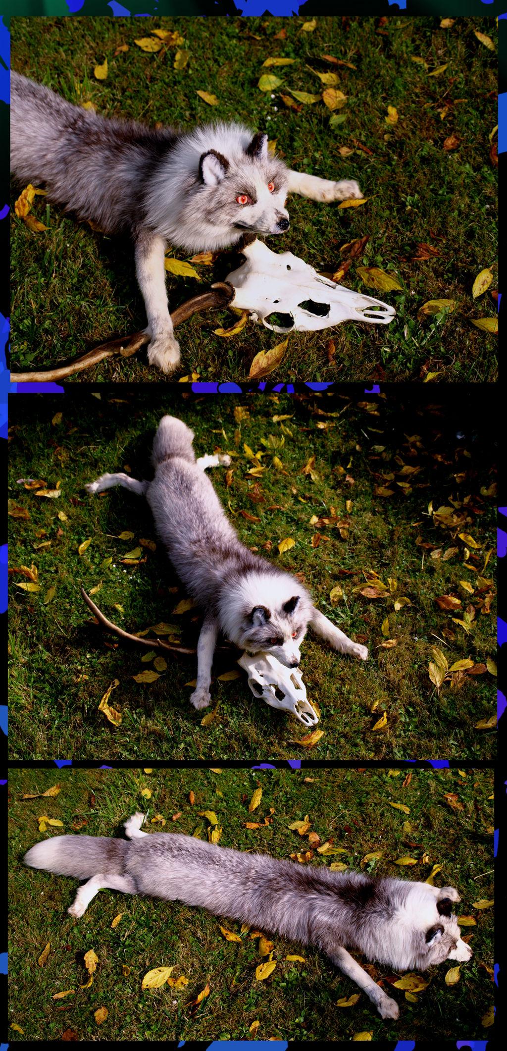 Ghost the platinum fox 3
