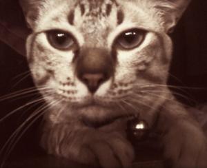 pisaj-elf's Profile Picture