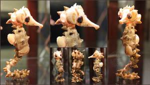 A Horse of Shells