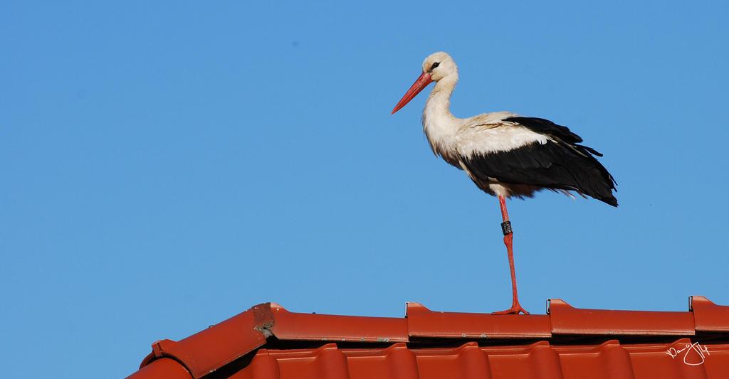 Storck^^ by Puschelpink