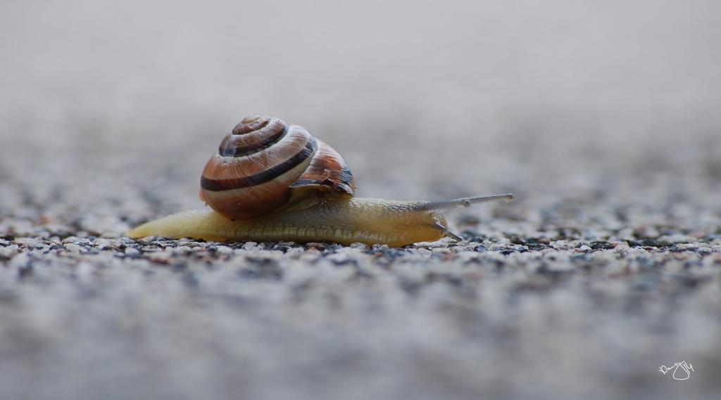 Snailway by Puschelpink