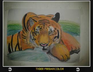 tigre by EDWYMVAGOVIESO