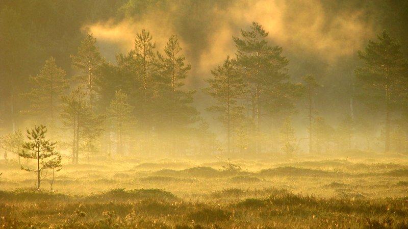29.6.2009: Morning gold by Suensyan