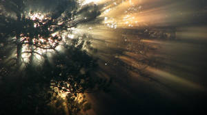 22.6.2010: Rays of Light II