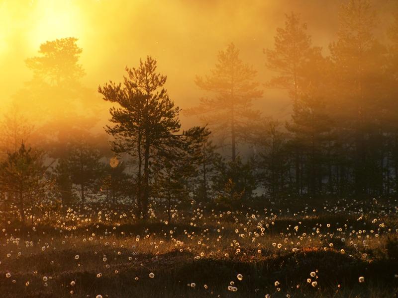 9.6.2012: A New Day by Suensyan