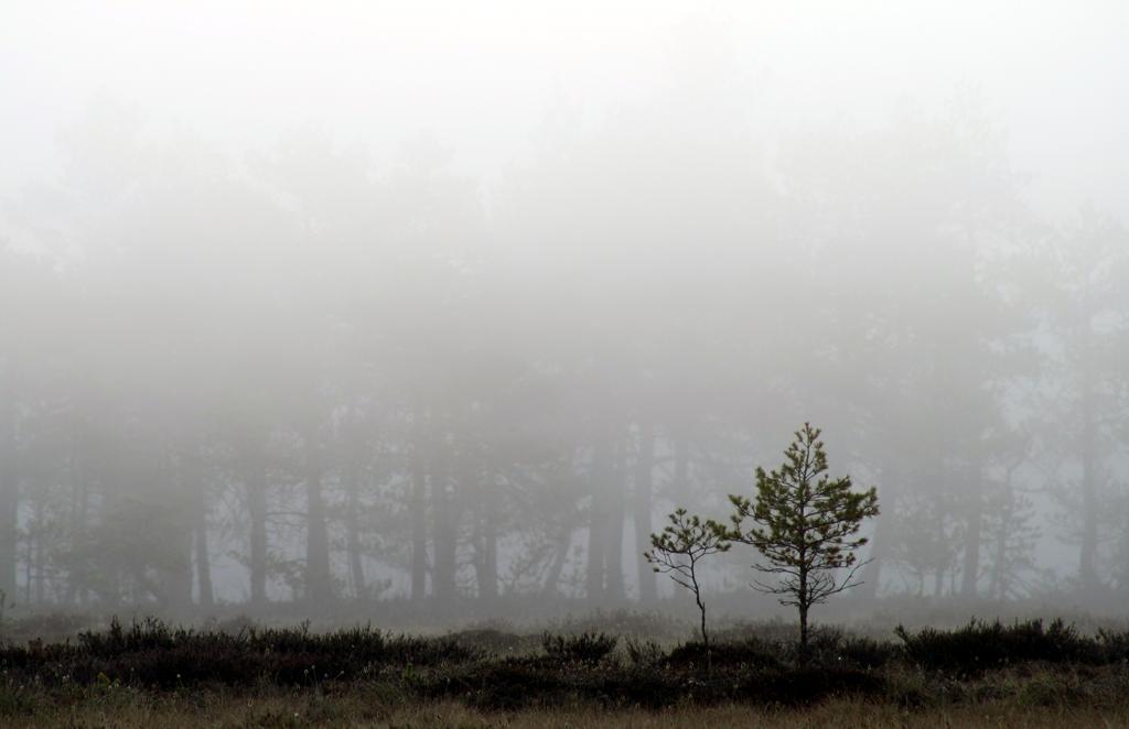 16.5.2013: Waiting for Sunrise by Suensyan