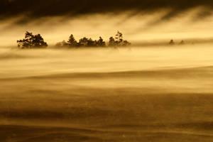 27.8.2013: Morning in Torronsuo National Park III by Suensyan