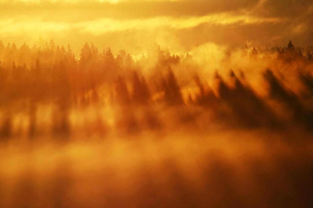 3.9.2013: Joy of Light by Suensyan