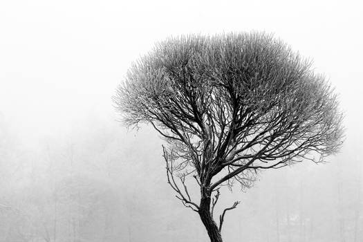 17.12.2016: Tree in the Winter's Fog III