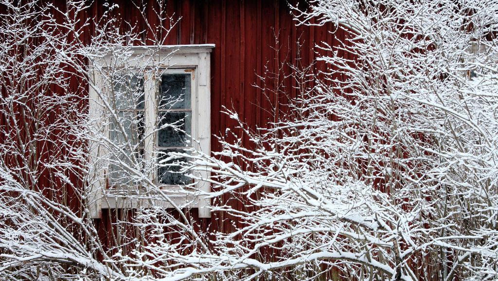 17.1.2017: Hiding with the Winter by Suensyan