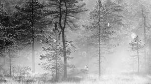 24.7.2017: Misty Forest