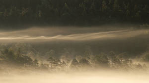27.7.2017: Misty morning