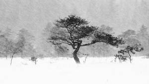 21.1.2021: Same Tree, Different Snowstorm