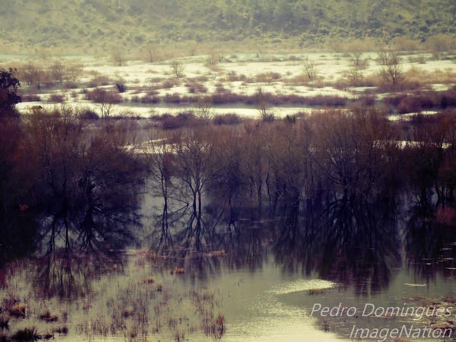 Swamp by P3droD