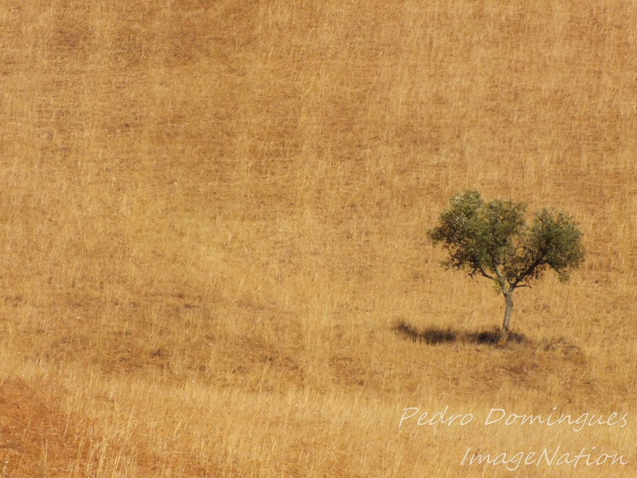 Alone by P3droD