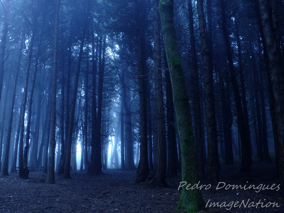 Into the woods by P3droD