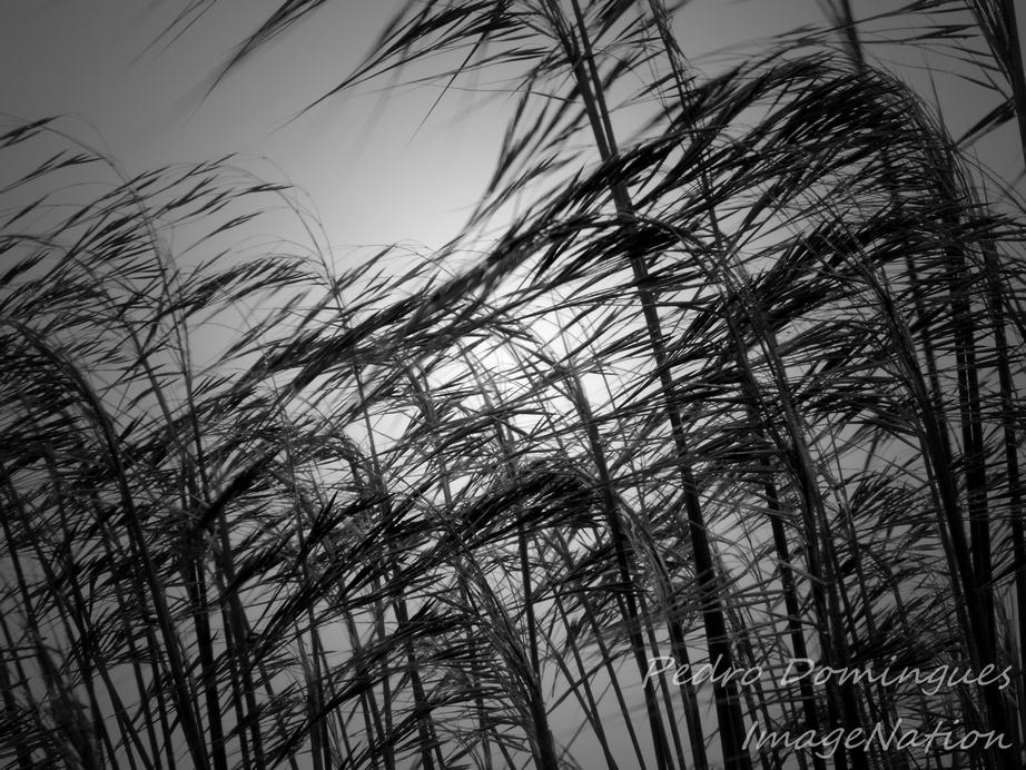 Wind by P3droD