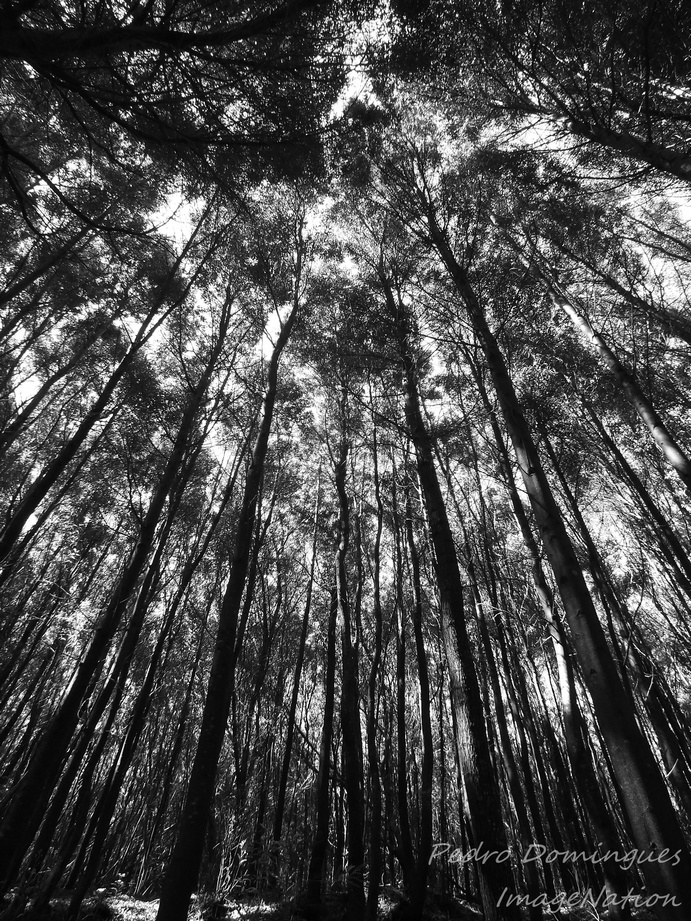 Woods 3 by P3droD