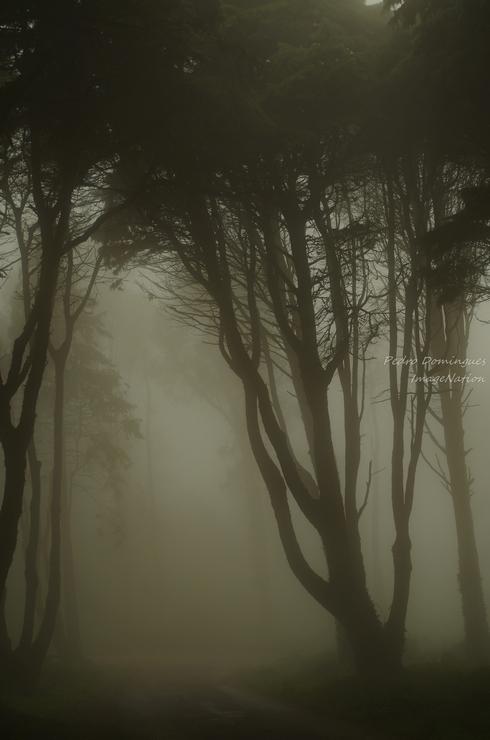 Fog 2 by P3droD