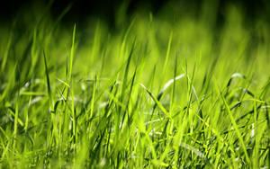 Sorrento's Grass by NewsVista