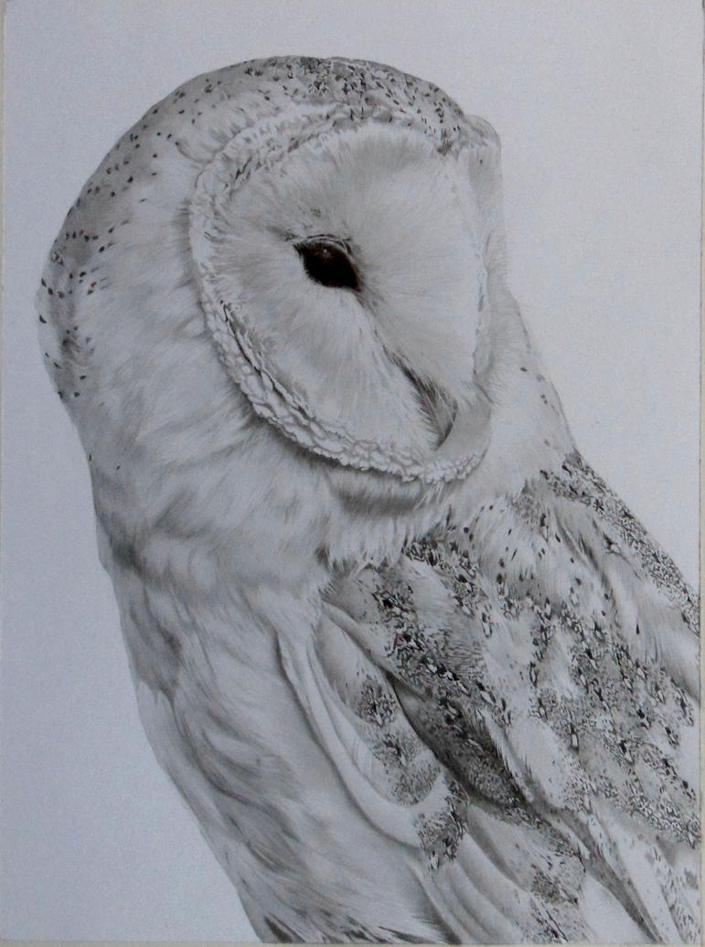 Barn owl by LukeT66