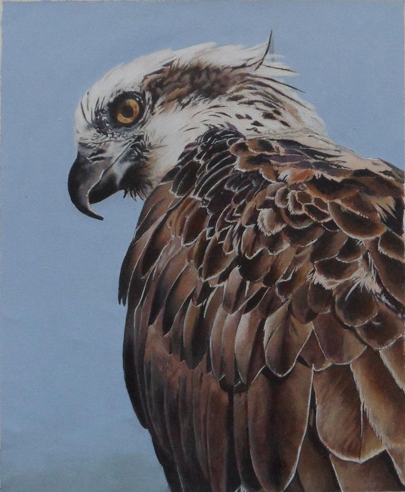 Osprey by LukeT66