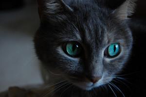 Lionicphere's Profile Picture