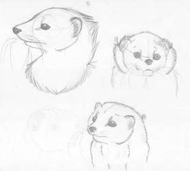 FerretSketching by LounaZ