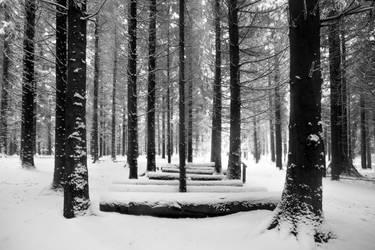 Winter In The Burgholz Arboretum