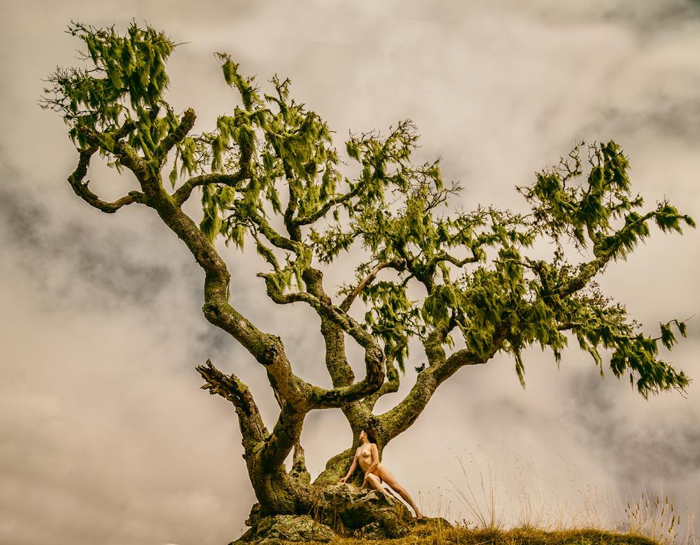Tree by ImpressionofLight