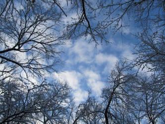 Sky in winter by bcm27