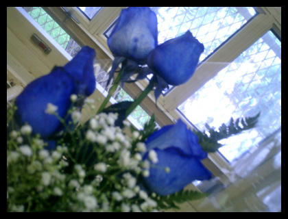 blue roses by traceyy