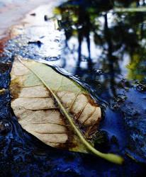 Una hoja seca en un lago by CristianVelazquez