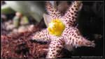 Alien Flower by Dr-Benway
