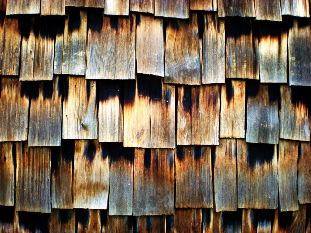cedar texture stock by redwolf518