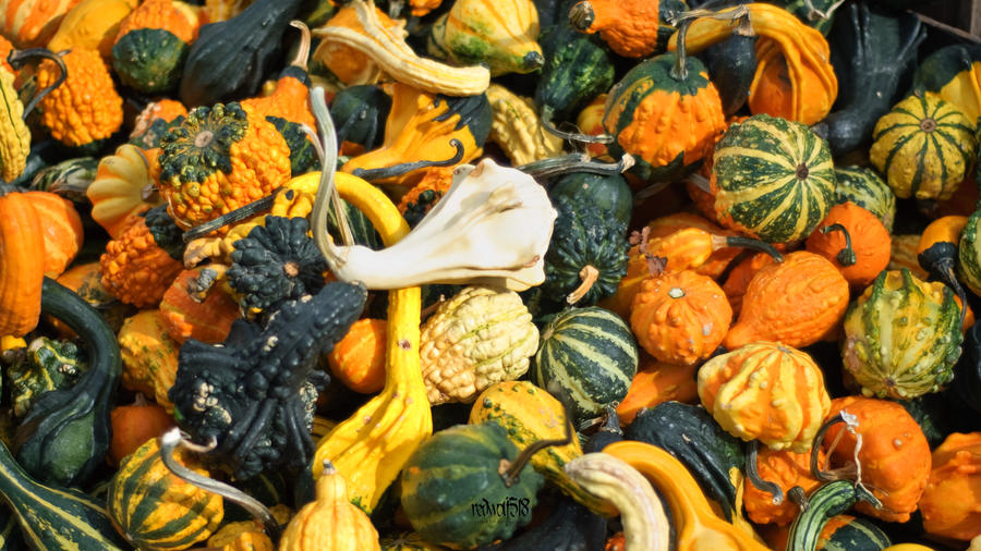 Autumn Bounty by redwolf518