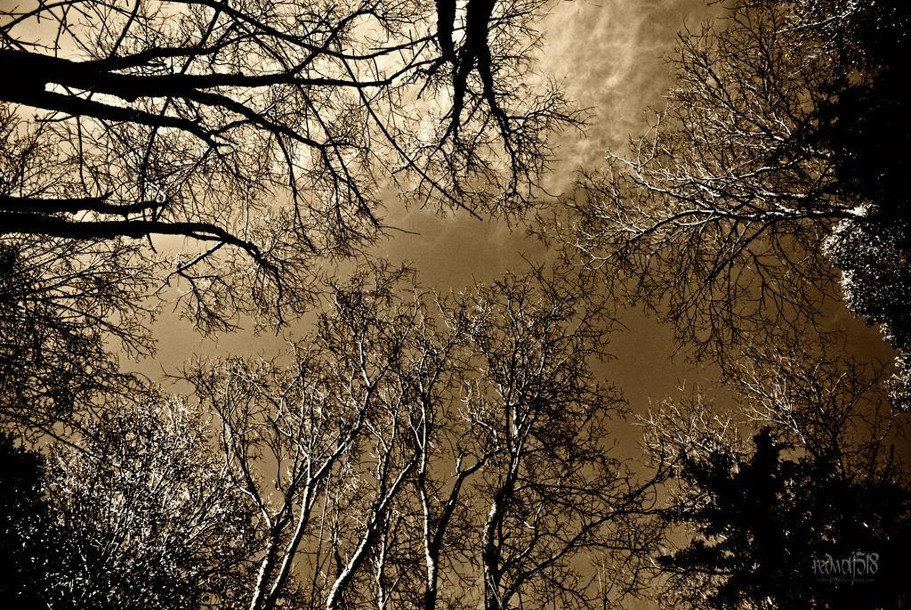 November Skies by redwolf518