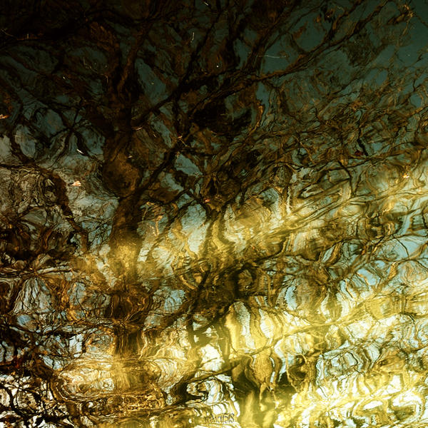 Surfing Winter's Light by redwolf518