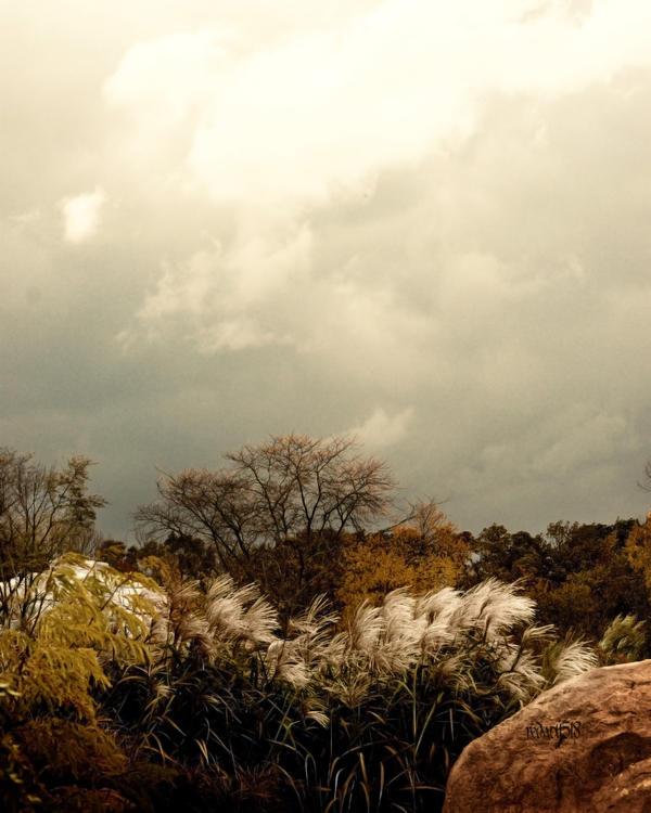 Rain's Comin' by redwolf518